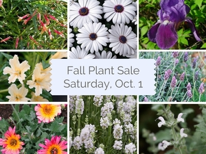 Medium fall plant salesaturday oct. 1