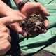 Thumb home 20composting 20techniques 20 1