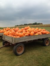 Pumpkin Fall Festival - start Oct 01 2016 1100AM