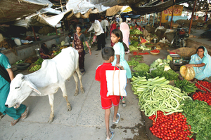 Medium vegetable 20market 20india prsm