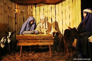 Medium 2014 nativity 3