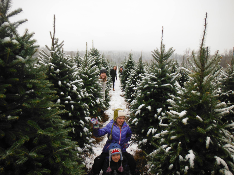vermont is home to many christmas tree farms that welcome families to cut their own tree we have been growing christmas trees long enough to have seen - How Long Does A Christmas Tree Take To Grow