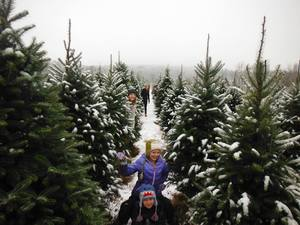 Tips from Whites Tree Farm Keep Your Christmas Tree Fresh - 11222016 0358PM