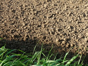 Medium 298371b soil