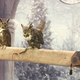 """Two owls on display at the """"Magical Creatures"""" booth at the Yule Ball. (Marina McTee/City Journals)"""