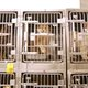 A row of cats at the shelter. (Keyra Kristoffersen/City Journals)