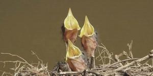 Medium baby birds 640x320