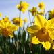 Malmborgs Garden Center Spring Open House - start Apr 29 2017 0900AM