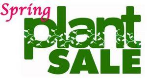 Medium spring plant sale
