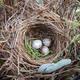 Thumb plants 20for 20nesting 20birds 20medium