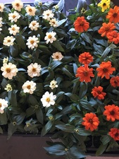 Medium flowers