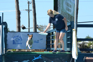 Crystal McClaran trains Bo Nose at Aqua Dog Sports in North Fort Myers Photo by Craig Garrett