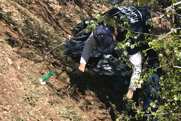 Employees from Jet Blue helped pull myrtle spurge at Tanner Park. (Natalie Mollinet\City Journals).