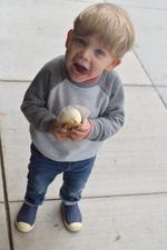 Medium lfa lafayette kid icecream