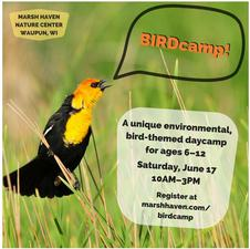 Medium birdcamp2017