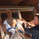 Equine massage helps keep horses fit and happy - 06132017 0208PM