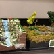 Students used all subjects to learn more about national parks. (Jet Burnham/City Journal)