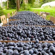 4 Sweet Spots for Berry Picking in Central Vermont  - 06262017 0559PM