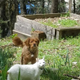 Penny the Pup and Kaji Kitty» Penny the Pup, a five-year-old spaniel-mixed breed, and Kaji Kitty, a six-year-old flame point Siamese, enjoy exploring the world together outside of their home in Placerville.—Alisyn Gularte and Matt McKurtis