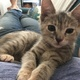 Chloe » I recently rescued this adorable baby girl. So far, she enjoys exploring her new digs, napping with Mama and chasing her own tail.—Heather L. Becker