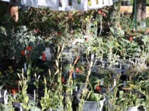 Main image fall plant sale