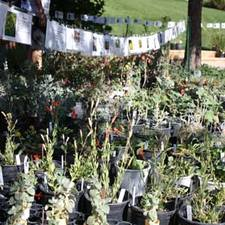 Medium fall plant sale