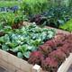 Thumb original 17 vegetable garden raised bed