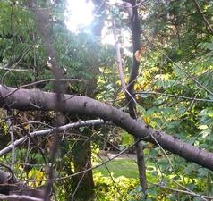 Medium tree 202