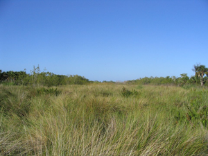 Trail Walks Explore Sanibels Interior Wetlands - start Mar 01 2018 1100AM
