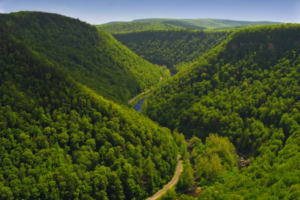 Pine Creek Gorge, as seen from the West Rim Trail. Nicholas A. Tonelli.