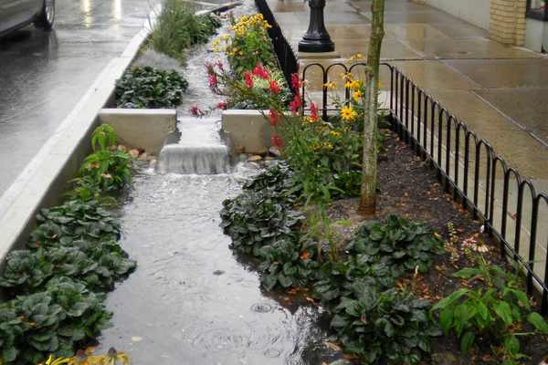 Full view of rain garden on west side of Allen Street