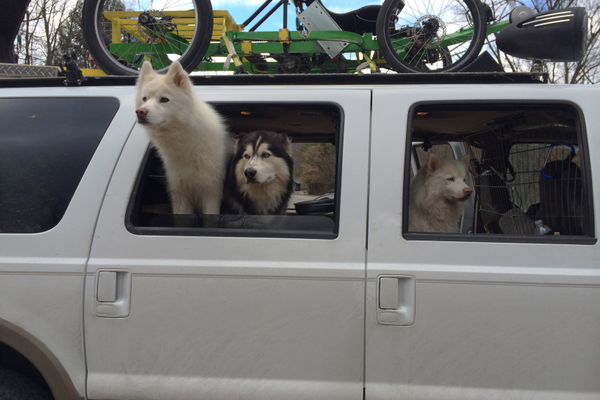 The dogs are excited to hit the trail!