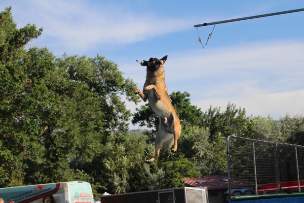 Dogs would jump almost seven feet to grab the toy as part of the Splash Dogs Super Vertical contest at Draper Days. (Travis Barton/City Journals)