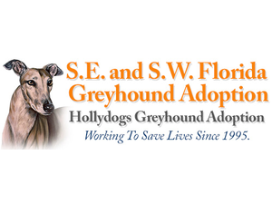 Hollydogs Greyhound Adoption - Bonita Springs FL