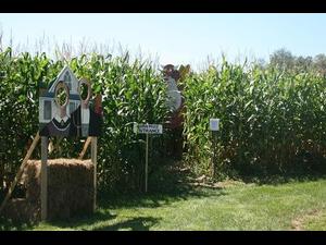 MUUV Twighlight Orchard  Corn Maze - start Oct 17 2018 0600PM