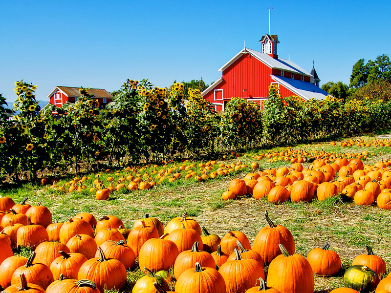 10 best places to pick apples and pumpkins in around the upper