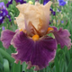 Horton Iris Garden- 1300 Varities of Irises  - start Apr 05 2019 1000AM