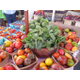 Lake Forest Park Farmers Market - start May 12 2019 1000AM