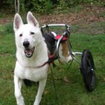 Duke, the inspiration behind Pets with Disabilites