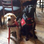 Hero Dogs in training