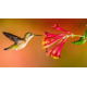 Learn About Our Local Hummingbird Species - start Jun 22 2019 1100AM