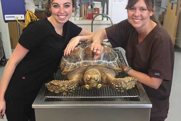 Licensed Veterinary Technicians Cheyenne Miller and April Scholtz comfort a friendly tortoise.