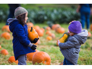 17th Annual Pumpkin Festival - start Oct 13 2019 1000AM