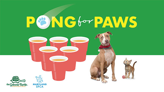 Pong 20for 20paws