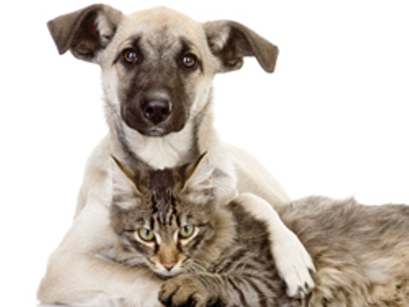 Chemicals Harm Pets, Too: Furry Friends are Affected ...