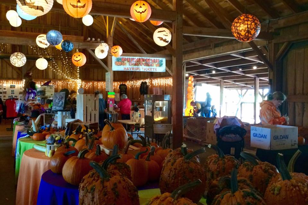 Pumpkin Festival at Cheeseman Farm