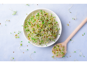 Fresh green alfalfa sprouts are a healthy superfood