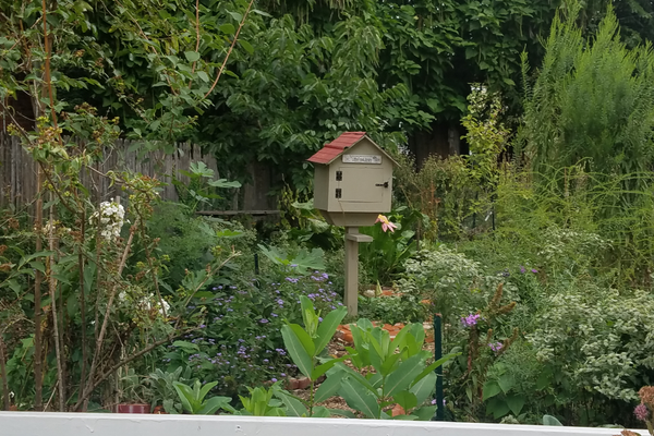 This Little Free Library is located in the Peffer Street Forest Garden in downtown Harrisburg. The garden is a certified native pollinator habitat and all the produce grown in it is free to residents.