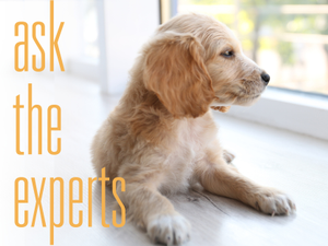 Ask the Experts What Are Some Ways to Get a Puppy Acclimated to a New Home