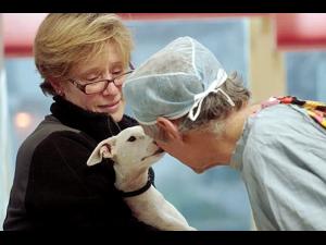 10th Annual Woodstock Vermont Film Series The Dog Doc - start Feb 08 2020 0530PM